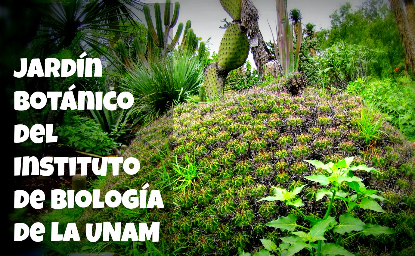 Jard n bot nico del instituto de biolog a de la unam for Plantas de un jardin botanico