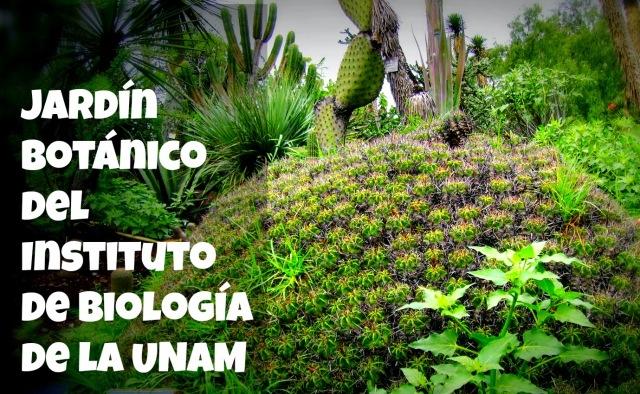 Jard n bot nico del instituto de biolog a de la unam for Jardin botanico cursos